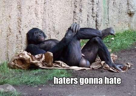 haters-gonna-hate-monkey-crossed-legs-1291945299k