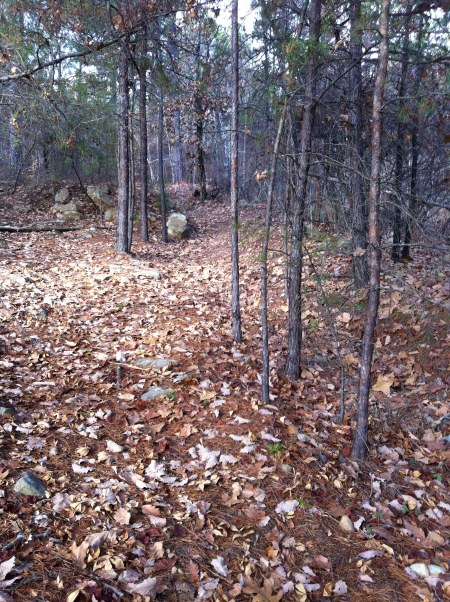 looking back up the trail from where it hits the forest parks soccer fields