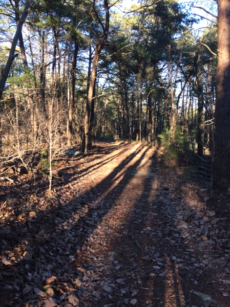 typical trail - in this case leading from radio tower to bob hood branch trail